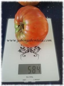 Tomate Corazon de Toro huerto ecologico