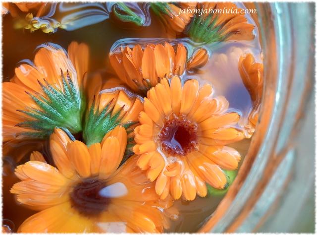 jabon de castilla macerado de calendula officinalis para hacer jabon casero