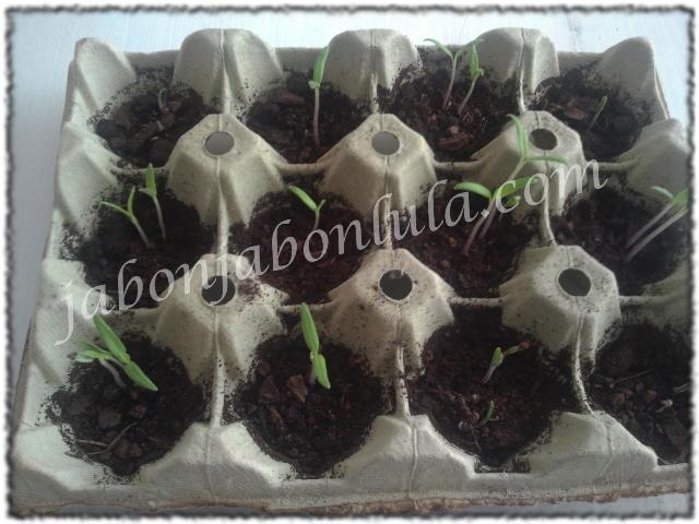 tomate ecologico, huerto urbano, jabones naturales, jabones de aceite de oliva, jabon de castilla