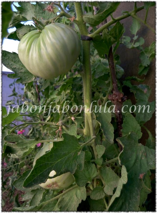 tomate ecologico, huerto urbano, sostenible, autosuficiencia, jabones naturales, jabones de aceite de oliva, jabon de castilla, permacultura, jardineria ecologica